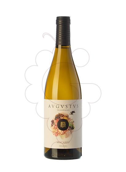 Foto Augustus Macabeu vino blanco