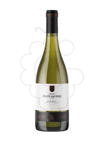 Foto Bernat Oller Picapoll vino blanco