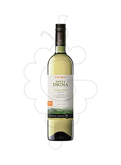 Foto Sta. Digna Xile Blanc Sauvignon vino blanco