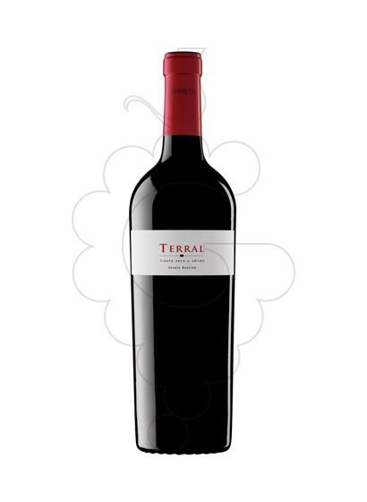 Foto Sumarroca Terral  vino tinto